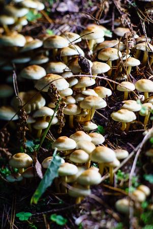 森のキノコ 写真素材 - 86577091