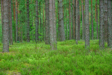 nice forest Stock Photo