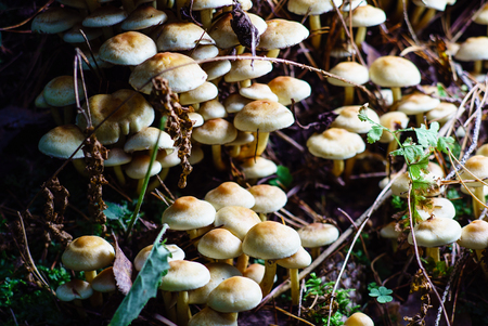 forest mushrooms Stok Fotoğraf