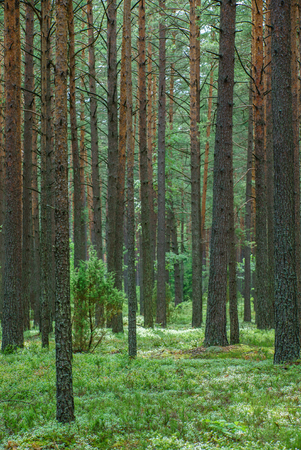 nice forest Stock Photo - 86577159