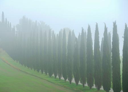 Typical fog Italian landscape in Tuscany