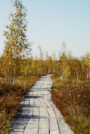 autumn landscape wooden path at grass field