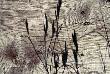 shadow on the plants on the wooden plank