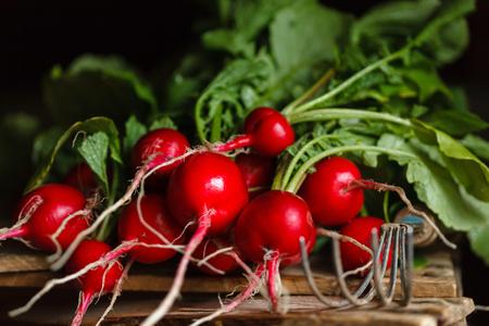 fresh radish Reklamní fotografie
