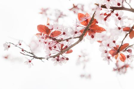 春の木 写真素材