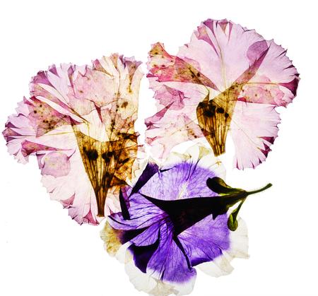 乾燥した花