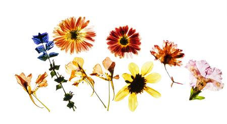 dry flowers 版權商用圖片