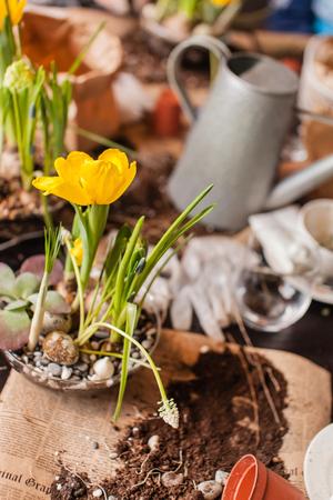 Gardener planting spring flower 版權商用圖片 - 89669450