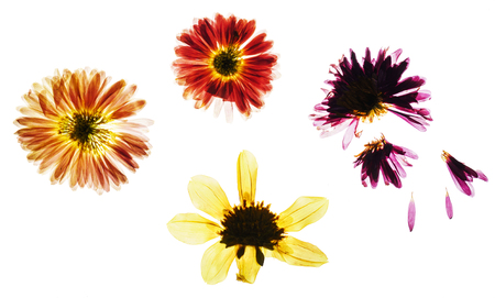 dry flowers isolated