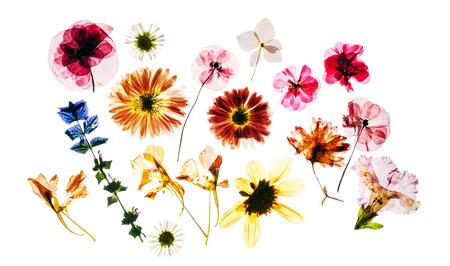 分離した乾燥した花
