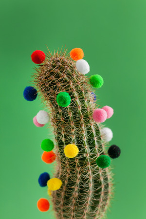 cactus with colorful balls Stock Photo