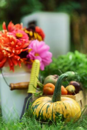 autumn arrangement with vegetables Stock Photo