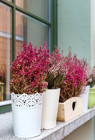 heide bloemen buiten