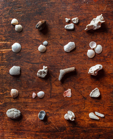 shell collection on the wooden background