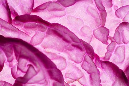 purple chinese cabbage