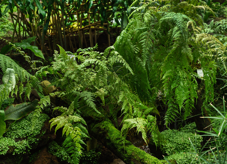 A Room Of Ferns In A Tropical Greenhouse