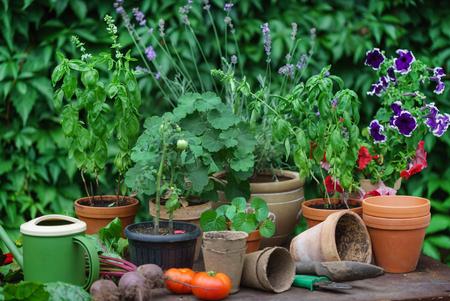 summer garden with vegetables