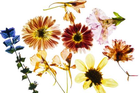 마른 꽃 스톡 콘텐츠