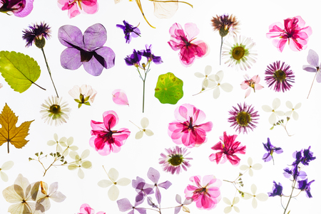 다채로운 마른 꽃