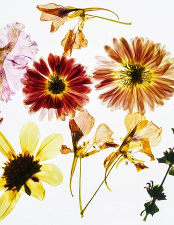 乾燥した花が孤立