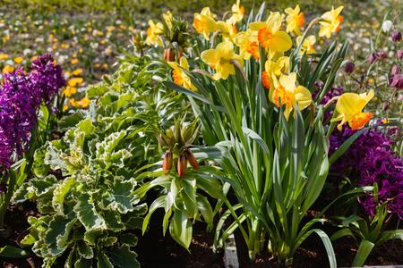 정원에서 봄 꽃