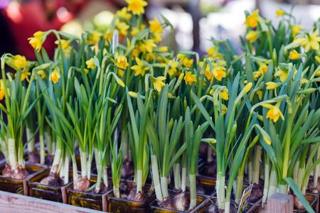 암스테르담의 꽃집