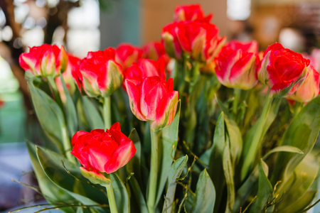 spring flowers in the vase 版權商用圖片