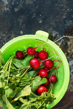 fresh radish with leaves