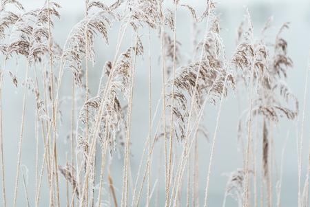 winter plants closeup Imagens