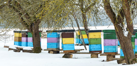 Colorful beehives with snowdrift on roofs