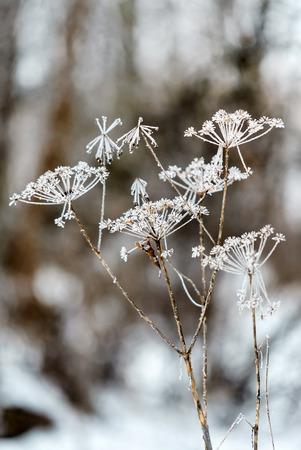 winter plant closeup Banco de Imagens