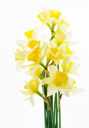 fresh narcissus flowers