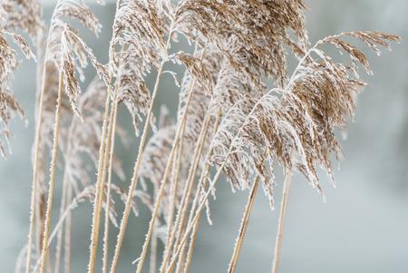 winter plants closeup 版權商用圖片