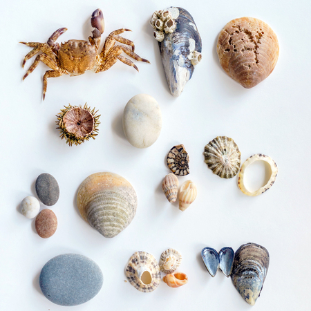 Collection of a seashells