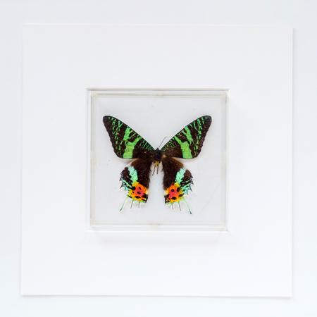 フレーム内の蝶