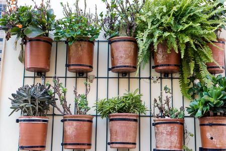 planten in de potten Stockfoto