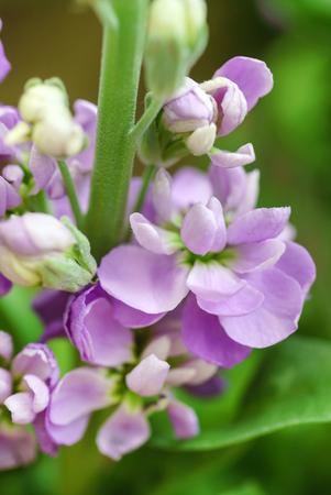 fresh flowers closeup Stock Photo