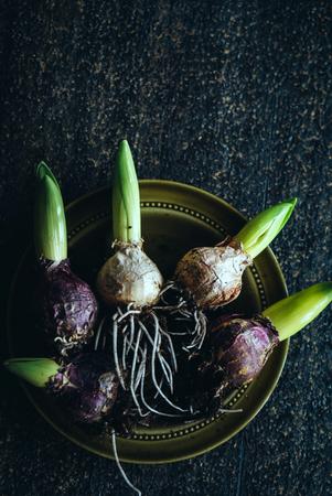 spring hyacint bulbs Banco de Imagens