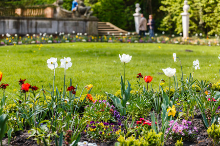 spring garden with flowers