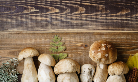 mushroom boletus on the wooden background Stock fotó