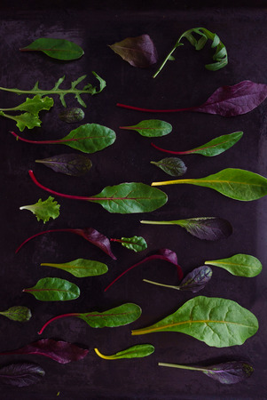 baby salad leaves Stock Photo