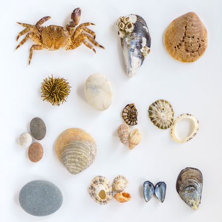 Collection of a seashells Imagens - 95952396