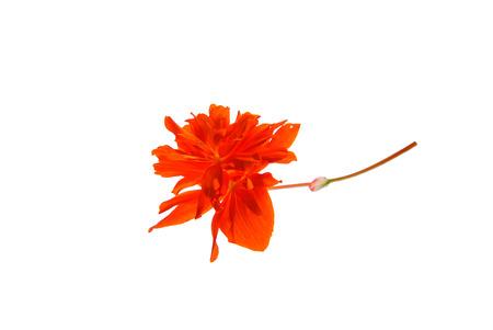 オレンジ色の花は孤立した