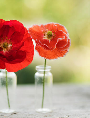 poppy flowers in vases Stock Photo