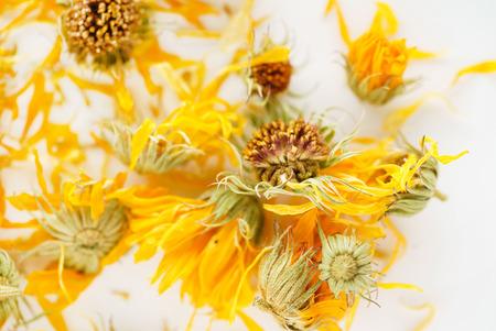 calendula flowers closeup Zdjęcie Seryjne