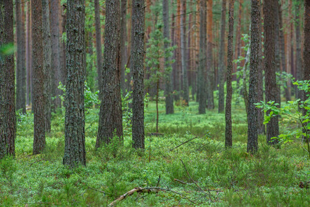 nice forest Stock Photo - 98170753