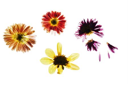 dry flowers 写真素材