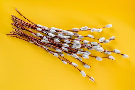 猫柳の枝 写真素材