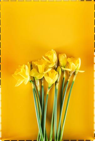 黄色いナルキッソス