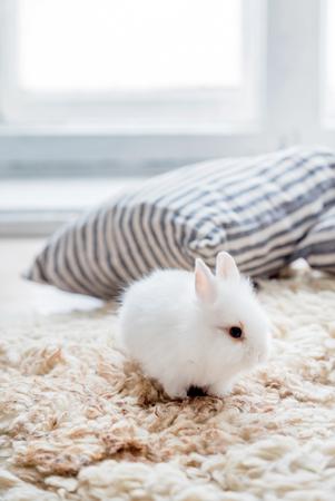 funny white rabbit